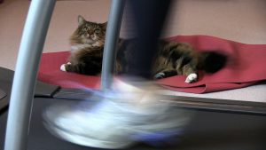 gym equipment cat