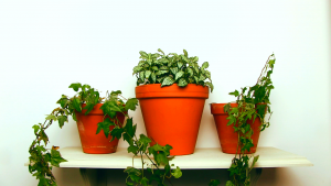 how to put up a shelf pots